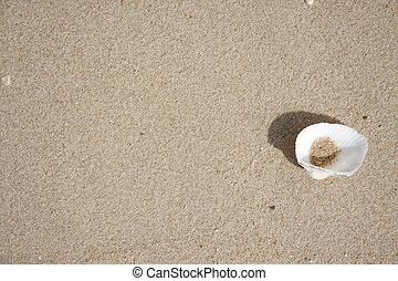 almeja, arena, cáscara