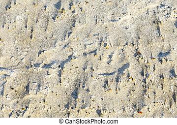 almeja, arena, playa de la cáscara