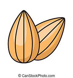 almond line flat icon