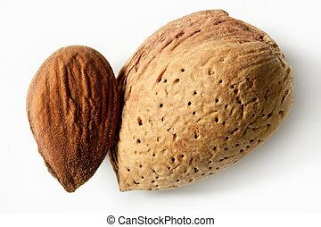 Almond macro image over white background, studio shot