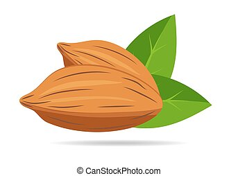 Almond nut with green leaves isolated on white background. Flat design style. Vector illustration.