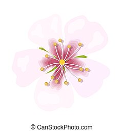 Almond pink flower isolated on white background. Macro, closeup. blossoming. Spring floral theme for postcard, decoration. Vector illustration. greeting card template