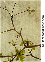 Almond tree branches on ribbed canvas background