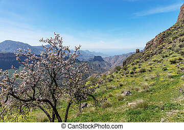 Almond tree in the foreground of the mountains