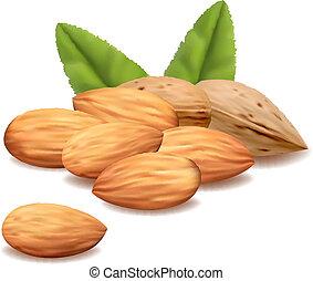 Almond. Vector