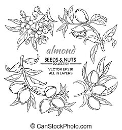 almond vector set - almond branches vector set on white ...