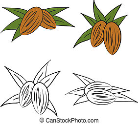 Almond with leaves. Vector