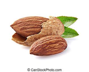 Almonds in closeup