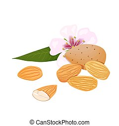 almonds. nuts in skins and peeled with leaf and flower
