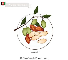 Afghanistan Fruit, Illustration of Bowl of Almonds. One of The Most Popular Fruits in Afghanistan.