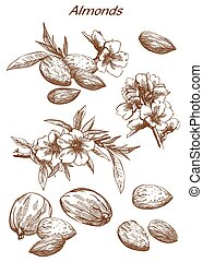 almonds set of sketches