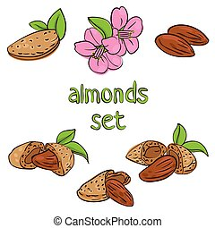almonds - vector set of almond nuts and flower in different...