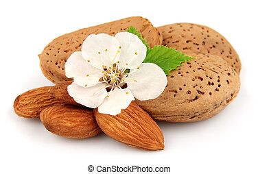 Almonds with flowers close up on white