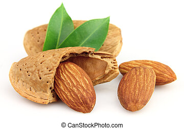 Almonds with leaves