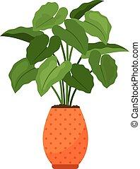 alocasia, 家の 植物, 中に, 花 鍋