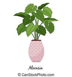 alocasia, 植物, 中に, ポット, アイコン
