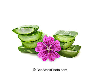 Aloe and mallow flower isolated on white background