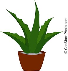 Aloe plant, illustration, vector on white background.