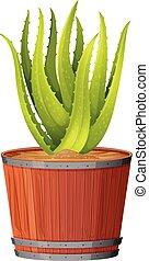 Aloe Plant in the Pot