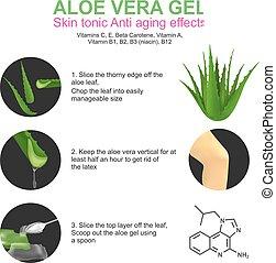 Aloe Vera - Aloe vera is a succulent plant species of the ...