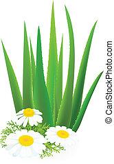Aloe-vera and camomiles