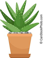 Aloe vera house plant in flower pot vector icon on white background
