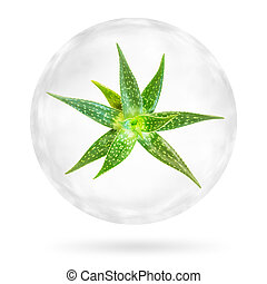 Aloe Vera in the bubble isolated on white background. Clipping paths included.