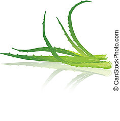 Aloe vera leaves. Vector illustration.