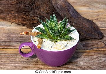 Aloe vera plant in a coffee pot.