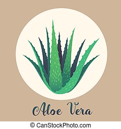 Aloe vera plant vector flat design illustration