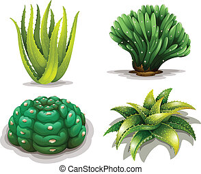 Aloe vera plants and cacti - Illustration of the aloe vera...