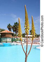 Aloe Vera Pool