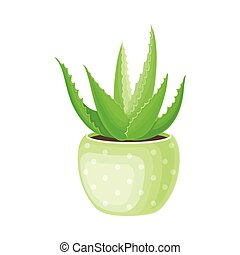 Aloe Vera Rosette of Large, Thick, Fleshy Leaves Growing in ...