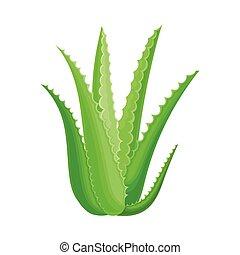Aloe Vera Rosette of Large, Thick, Fleshy Leaves Vector ...