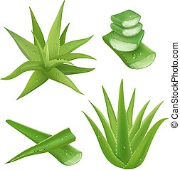 Aloe vera plant realistic set with cut pieces isolated vector illustration