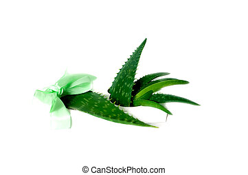 Aloe Vera sliced isolated on a white background. Concept herbal medicine for skin care and hair care. Close up. Copy space.