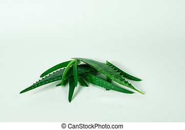 Aloe Vera sliced isolated on white background. Concept herbal medicine for skin care and hair care.