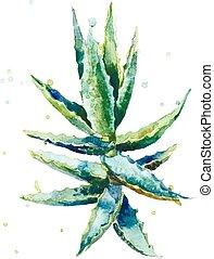 Aloe vera. Watercolor vector succulent aloe. Hand-drawn...