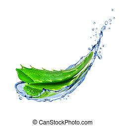 Aloe vera with water splashes isolated on white background