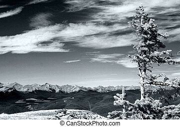 A lonely tree at the summit of one of our frequent summer hikes - Prairie Mtn in Kananaskis Country. The front ranges of the Canadian Rockies are in the background.