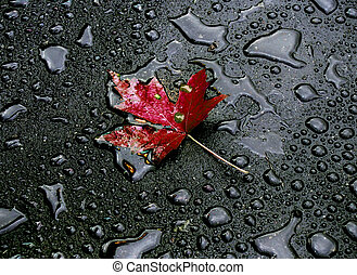 alone - After rain