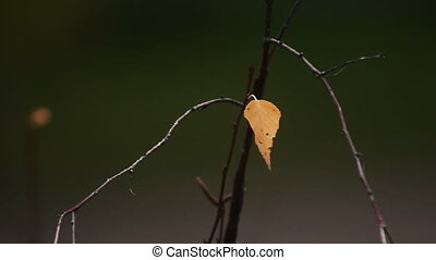 Alone autumn birch leaf. Against th