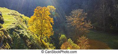 Alone autumn tree on mountain at sunset .