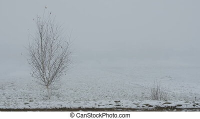 Alone bare tree in fog in winter.