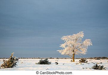 Alone frosty tree in a plain landscape