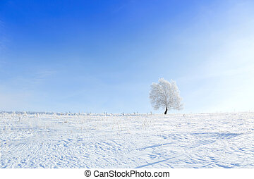 Alone frozen tree in winter snowy field
