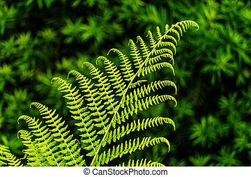 leaf of Fern on green blur background in the garden.
