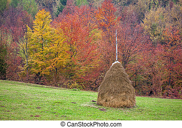 haystack - alone haystack near autumn forest