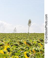 Alone high plant