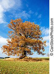 alone orange autumn tree on a green field